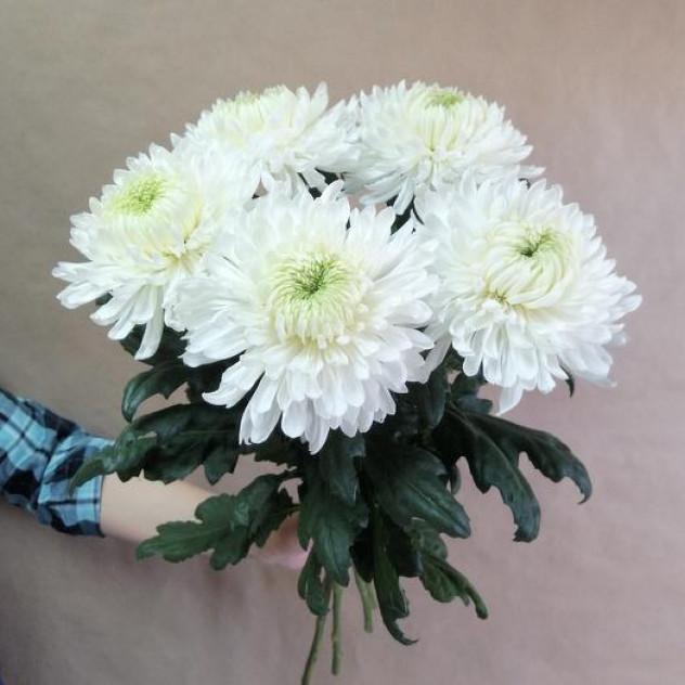 Букет из 5 хризантем Магнум